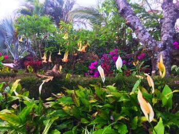 garden in Boquete Panama