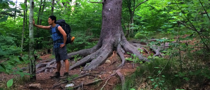 tree20root