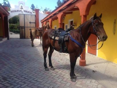 Horse in Boquete Panama