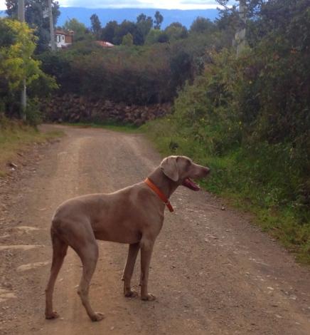 dog who adopted us in Villa de Leyva