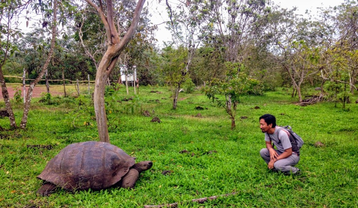 Facing a Tortoise in Galapagos