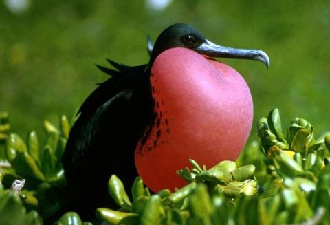 Image Credit: E. Kirdler, US Fish and Wildlife