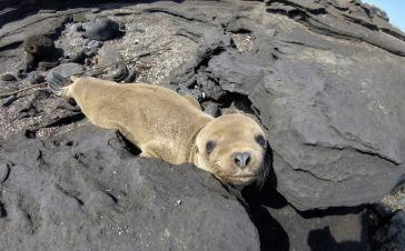 Rabida Island - red beach (26).jpg